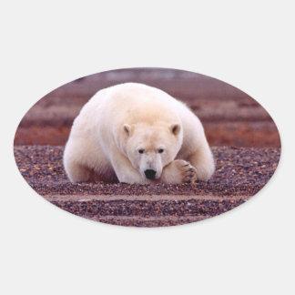 Oso polar pegatina ovalada