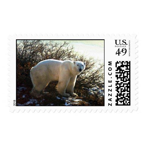 Oso polar por el sauce de la tundra