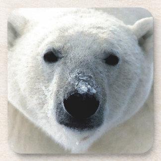 Oso polar posavasos