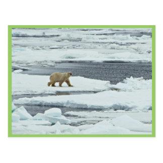 Oso polar postales