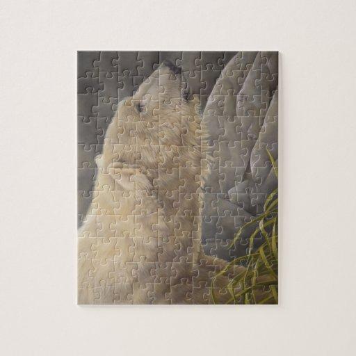 Oso polar rompecabezas con fotos