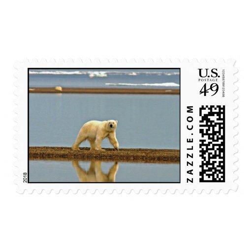 Oso polar que camina a lo largo de la costa timbres postales