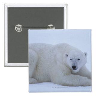 Oso polar que descansa en nieve pin cuadrado