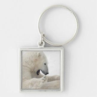 Oso polar que engancha a una lucha con otro oso llaveros personalizados
