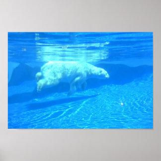 Oso polar que nada impresiones