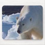 Oso polar salvaje en Svalbard, (Spitsbergen) Alfombrilla De Raton
