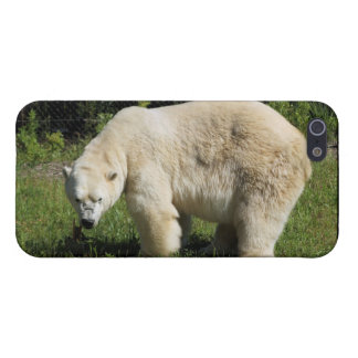 oso polar scowling iPhone 5 funda