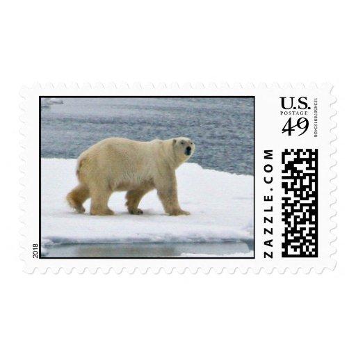 Oso polar sello