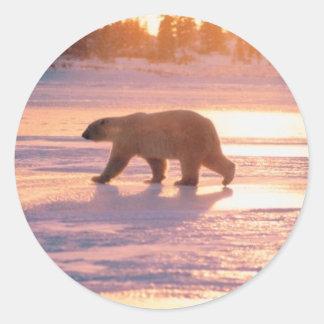 Oso polar solitario pegatinas