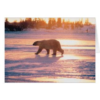 Oso polar solitario tarjeta de felicitación