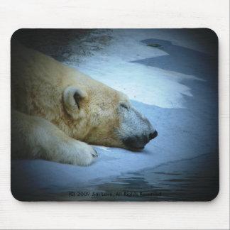 Oso polar tapetes de ratones