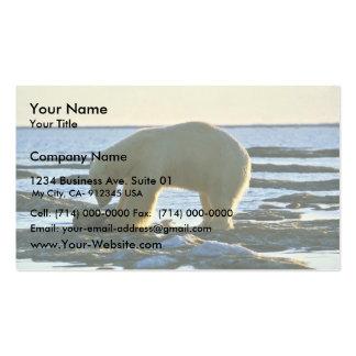 Oso polar plantilla de tarjeta personal