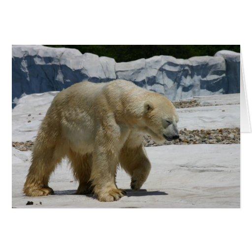 Oso polar tarjeta de felicitación