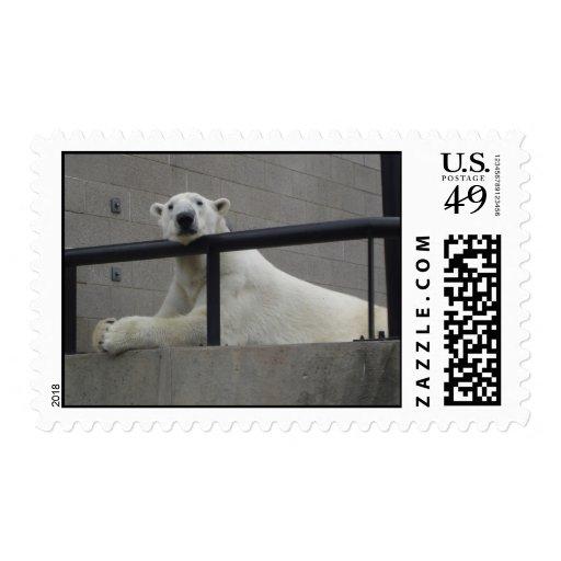 Oso polar timbres postales