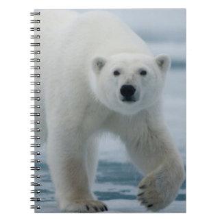 Oso polar, Ursus Maritimus, adulto Libros De Apuntes