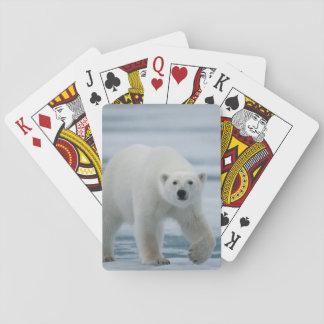 Oso polar, Ursus Maritimus, adulto Naipes