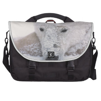 Oso polar Urus Maritimus ártico Churchill Bolsa De Ordenador