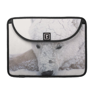 Oso polar, Urus Maritimus, ártico, Churchill, Fundas Para Macbook Pro