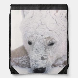 Oso polar Urus Maritimus ártico Churchill Mochila