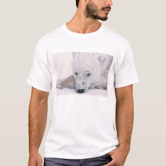Oso polar, Urus Maritimus, ártico, Churchill, Playera