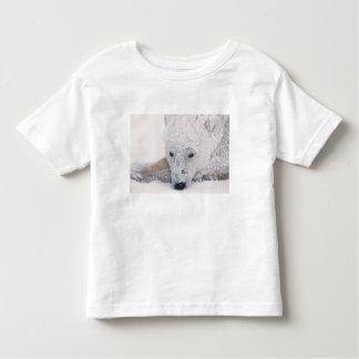 Oso polar, Urus Maritimus, ártico, Churchill, Playera De Bebé