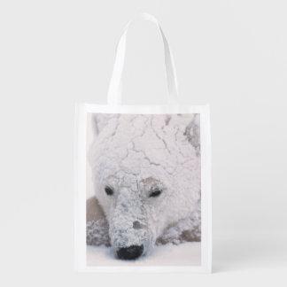 Oso polar Urus Maritimus ártico Churchill Bolsa Para La Compra
