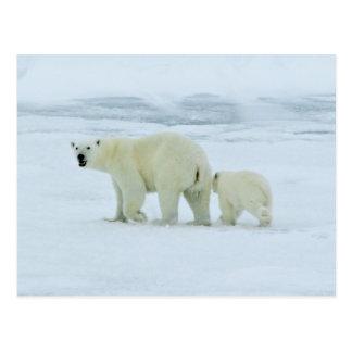 Oso polar y Cub Tarjeta Postal