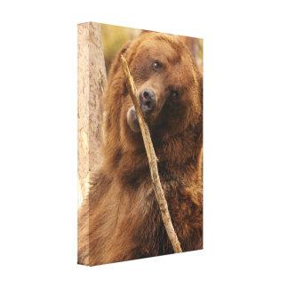 oso que juega con un palillo lienzo envuelto para galerias