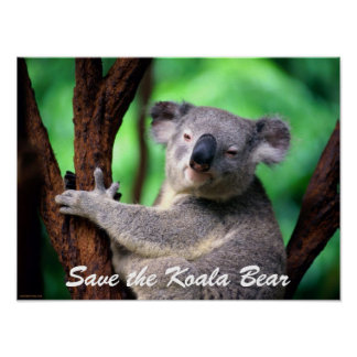 Oso-Reserva de la Poster-Koala