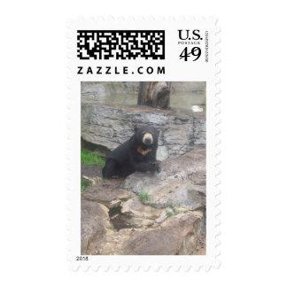 oso sellos