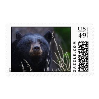 oso franqueo