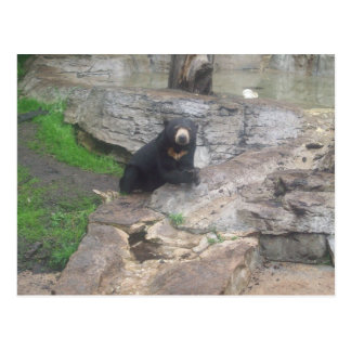 oso postal