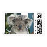 Oso y bebé lindos de koala envio