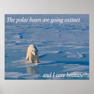 Osos Anti-Polares Póster