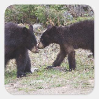 Osos Cubs negros Pegatina Cuadrada