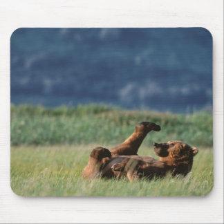 Osos de Brown en el juego, arctos del Ursus, Alask Alfombrilla De Ratón