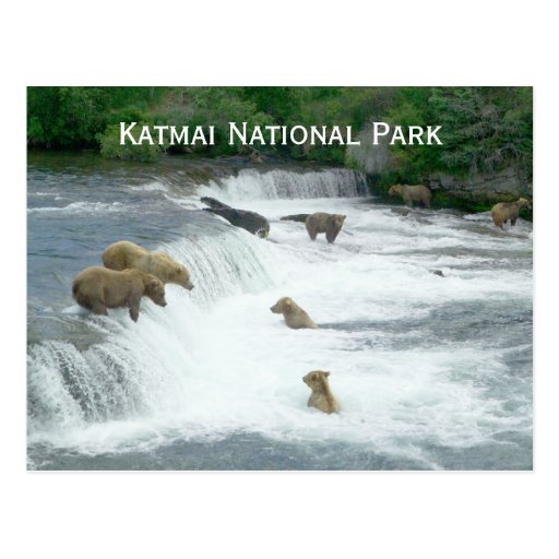 Osos de Brown Fishng en la postal de Katmai NP