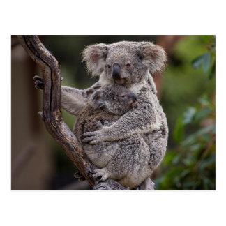 Osos de koala Snuggling Tarjetas Postales