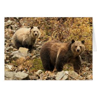 Osos grizzly hacia fuera para un paseo tarjeta de felicitación