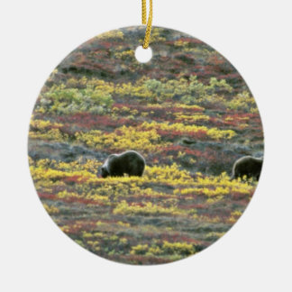 Osos grizzly, parque nacional de Denali, Alaska la Adorno Redondo De Cerámica