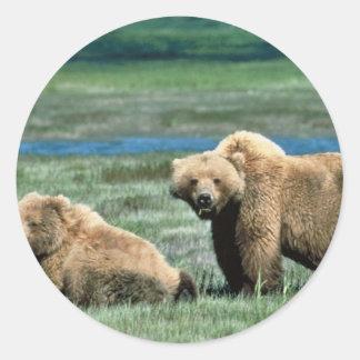 Osos grizzly pegatina redonda