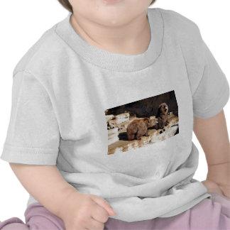 Osos grizzly camiseta