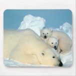 Osos polares alfombrillas de ratones