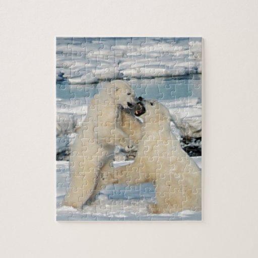 Osos polares de Alaska Puzzles Con Fotos