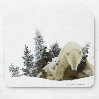 Osos polares en el parque nacional de Wapusk Tapetes De Ratones