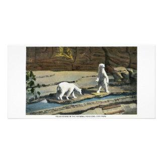 Osos polares en el parque zoológico de Denver Tarjetas Fotográficas Personalizadas