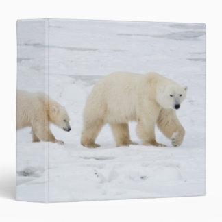 Osos polares femeninos y dos cachorros 2