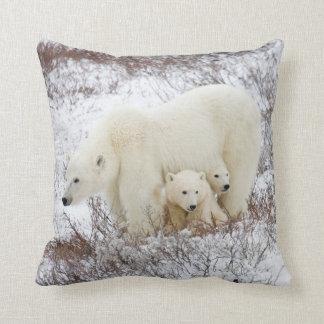 Osos polares femeninos y dos cachorros cojín