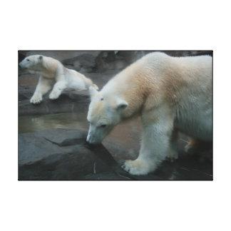 Osos polares lona estirada galerías
