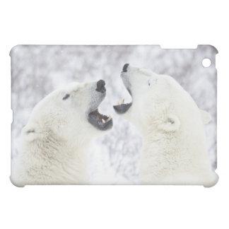 Osos polares que juegan en la nieve